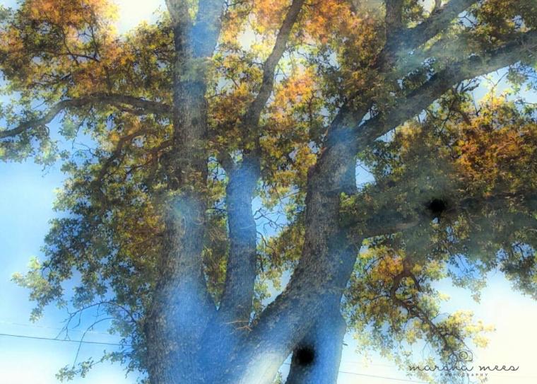 treeoflife copy